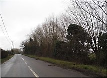 TL9498 : Thompson Road, Griston by David Howard