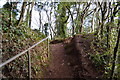 SX9267 : South West Coast Path, Valley of the Rocks by N Chadwick
