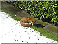 NT2470 : Fox in the sun by M J Richardson