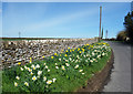 SP4517 : Flowers by the Wall by Des Blenkinsopp