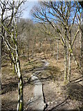 NY2824 : Permissive path in Brundholme Wood by Christine Johnstone