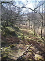 NM6673 : Old path descending woods from Shona Beag by John Smith
