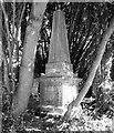TG2108 : Obelisk in the bushes by Evelyn Simak