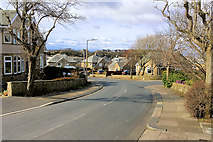 SD4160 : Glen View Avenue, Higher Heysham by David Dixon