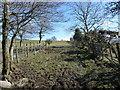 NY1835 : Field entrance, just north of Sunderland by Christine Johnstone