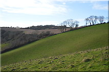 SX9370 : Steep field by South West Coast Path by N Chadwick