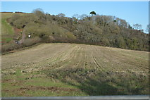 SX9370 : Field by Teignmouth Rd by N Chadwick