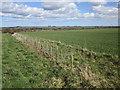 TA0563 : New hedge alongside the Pockthorpe to Kilham road by Jonathan Thacker