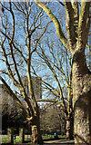 ST5973 : St Matthias Park, Bristol by Derek Harper