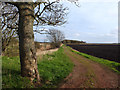 SD3820 : Path from Back Drain Bridge to Sluice Covert : Week 15