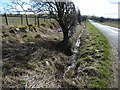 NY1535 : Drainage ditch alongside the road to Blindcrake by Christine Johnstone