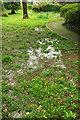 SX9265 : Waterlogged ground, Tessier Gardens by Derek Harper