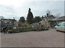 SJ5021 : Part of a garden centre at Black Birches near Hadnall, Shropshire by Jeremy Bolwell