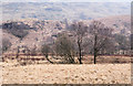 NN3117 : Grass tussocks with dark trees beyond by Trevor Littlewood