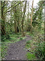 TQ7512 : Path in RSPB Fore Wood by PAUL FARMER