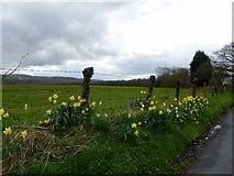 SD6212 : Springtime flowers by Philip Platt