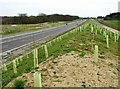 TG2614 : The NDR between North Walsham and Wroxham road roundabouts by Evelyn Simak