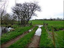 H5371 : Muddy lane by Kenneth  Allen