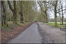 TQ2363 : London Loop, Nonsuch Park by N Chadwick