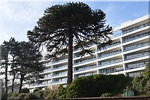SX9063 : Apartment block, Torbay Rd by N Chadwick