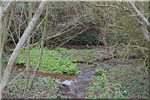 SX8158 : Small stream by N Chadwick