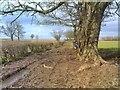 SO7596 : Muddy Path by Gordon Griffiths
