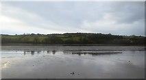 SX8972 : Teign estuary by N Chadwick