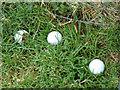 NS4372 : Three golf balls by Thomas Nugent