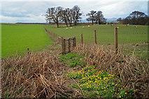NH5857 : Outlook from Drummondreach Oak Wood by Julian Paren