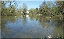SU9946 : Pond behind Dagley Lane by Des Blenkinsopp