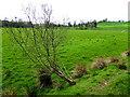 H4268 : Rakeeragh Townland by Kenneth  Allen