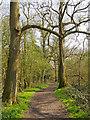 TQ5682 : Spring sunshine in Running Water Wood, Belhus Woods Country Park by Roger Jones