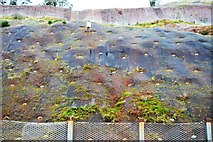 SX9574 : Cliff protection by the railway by N Chadwick