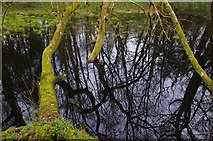 NY0265 : Pond in Caerlaverock Castle Wood by Ian Taylor