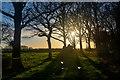 ST1205 : East Devon : Grassy Field : Week 16