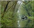 SJ8611 : Lapley Wood along the Shropshire Union Canal : Week 17