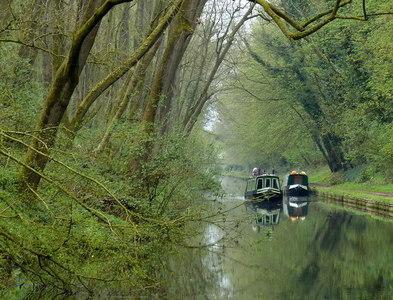SJ8611 : Lapley Wood along the Shropshire Union Canal by Mat Fascione