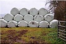 SX8058 : Wrapped bales by N Chadwick