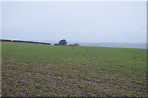 SX8058 : Spot the path across the field by N Chadwick