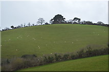 SX9575 : Devon pasture by N Chadwick