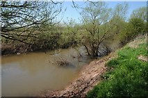 SO8452 : The River Teme by Philip Halling