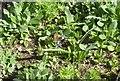 NJ6201 : A spring Small Tortoiseshell (Aglais urticae) by Stanley Howe