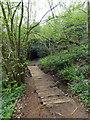 TQ7812 : Footbridge at Marline Valley Nature Reserve by PAUL FARMER