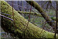 SN9457 : Moss covered tree trunk in boggy valley woodland by Andrew Hill