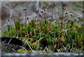 SN9557 : Moss on a tree stump by Andrew Hill