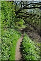 SO8552 : Footpath beside the River Severn by Philip Halling