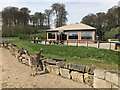 ST8244 : Watering Hole at Longleat by Jonathan Hutchins