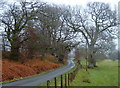 SN9959 : Lane towards the river Wye by Andrew Hill