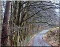 SN9961 : Track - Wye valley walk between Llanwrthwl and Newbridge-on-Wye by Andrew Hill