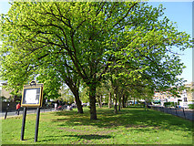 TQ4077 : Trees in leaf at the Royal Standard roundabout by Stephen Craven